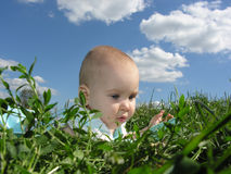 Baby in herb. And sky royalty free stock image