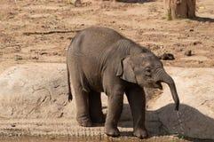 Baby het Indische olifant drinken van een pool royalty-vrije stock foto's