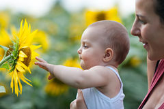 Baby het spelen met zonnebloem Stock Foto's