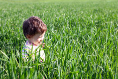 Baby in high green grass Stock Photos