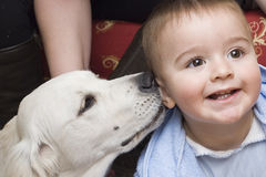 A baby with his pet. A little child with his pet talking to his ear Stock Images