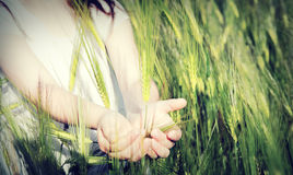 Baby hold handles wheat Royalty Free Stock Photos