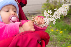 Baby holding a blooming branch Royalty Free Stock Photography