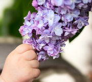 Baby holding branch of lilac Royalty Free Stock Photo