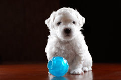 Baby-hond stock afbeelding