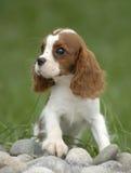 baby hond Royalty-vrije Stock Fotografie