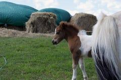 A baby horse at the farm stock photos