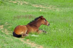 Baby horse on grass Royalty Free Stock Image