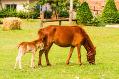 Baby horse with mother in green grass. On natural light Stock Photo