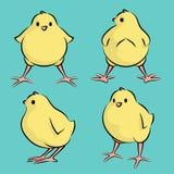 Baby-Huhn von vier Winkeln Lizenzfreie Stockfotos