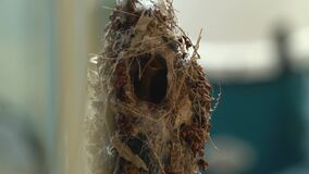 Baby hummingbird in the nest close up