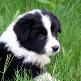 Baby-Hundheadshot Lizenzfreies Stockfoto