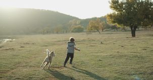 Baby husky dog playing with a cute boy three years old in the middle of field , they spending a good time together stock video footage