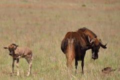 Baby im Busch 1 Stockfoto