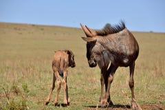 Baby im Busch 1 Stockfotografie