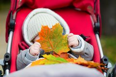 Baby im Spaziergänger, der mit Herbstlaub spielt Stockbild