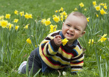 Baby In Daffodils