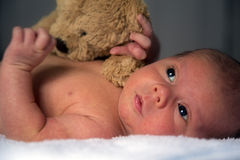 Baby Infant Newborn New-Born Portrait. Photograph of a new-born baby between four (4) and five (5) weeks of age pictured with a bear toy Royalty Free Stock Photos