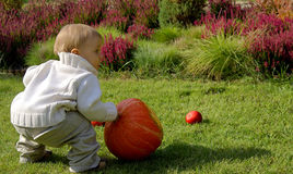 Baby infant with pumpkin Stock Photography