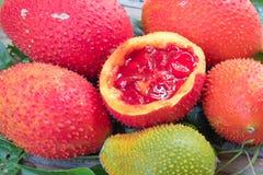 Baby jackfruit, Cochinchin gourd, Spiny bitter gourd, Gac fruit, Royalty Free Stock Photos