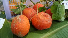 Baby Jackfruit Royalty Free Stock Image