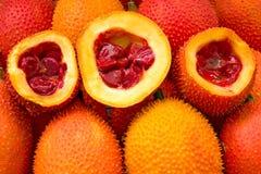Baby Jackfruit Vegetable herbs are good for health. Baby Jackfruit Momordica cochinchinensis Vegetable herbs are good for health stock images