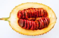 Baby Jackfruit Spiny Bitter Gourd Royalty Free Stock Image