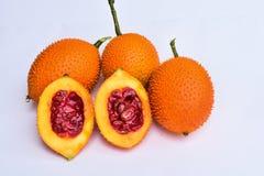 Baby jackfruit. Stock Image