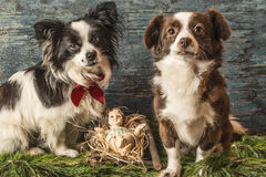 Baby Jesus and two dogs Royalty Free Stock Image
