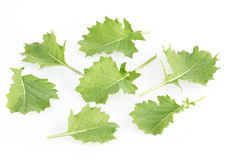 Baby Kale Stock Images
