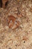 Baby-Kaninchen Stockbild