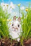 Baby Kaninchen im Gras Stockfotografie