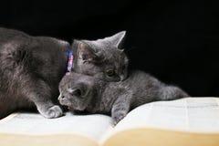 baby katje met zijn moeder royalty-vrije stock foto