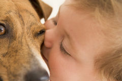 Baby kissing dog royalty free stock photography