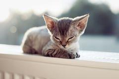 Baby kitten. Little sleepy devon rex kitten laying down on a radiator. Feeling  warmth. Heating season Stock Photos
