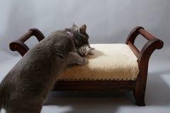 Baby kitten Stock Photography