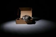 Baby kitten in a cardboard box Royalty Free Stock Photos