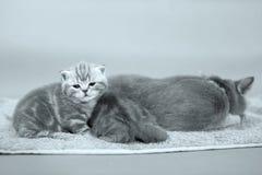 Baby kitten Stock Photos