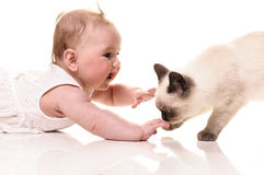 Baby with kitten. Baby girl playing with british shorthair bluepoint kitten. Isolated on white background stock photography