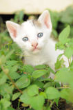 Baby kitten among the green grass Stock Photography