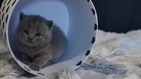 Baby kitten hiding in a round box stock video footage