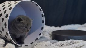 Baby kitten hiding in a round box stock video