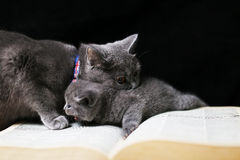 Baby kitten with his mother Royalty Free Stock Photo