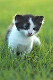 Baby Kitten Outdoors in Grass Royalty Free Stock Photography