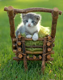 Baby Kitten Outdoors in Grass Royalty Free Stock Photo