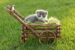 Baby Kitten Outdoors in Grass Royalty Free Stock Photos