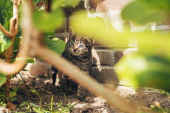 Baby kitten playing outdoors in the garden Royalty Free Stock Image