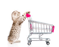 Baby kitten with shopping trolley. isolated on white background Royalty Free Stock Images