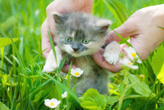 Baby Kitten take Fun in Green Grass Stock Images