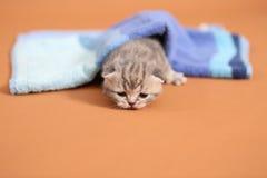 Baby kitten under a blue towel Stock Photos